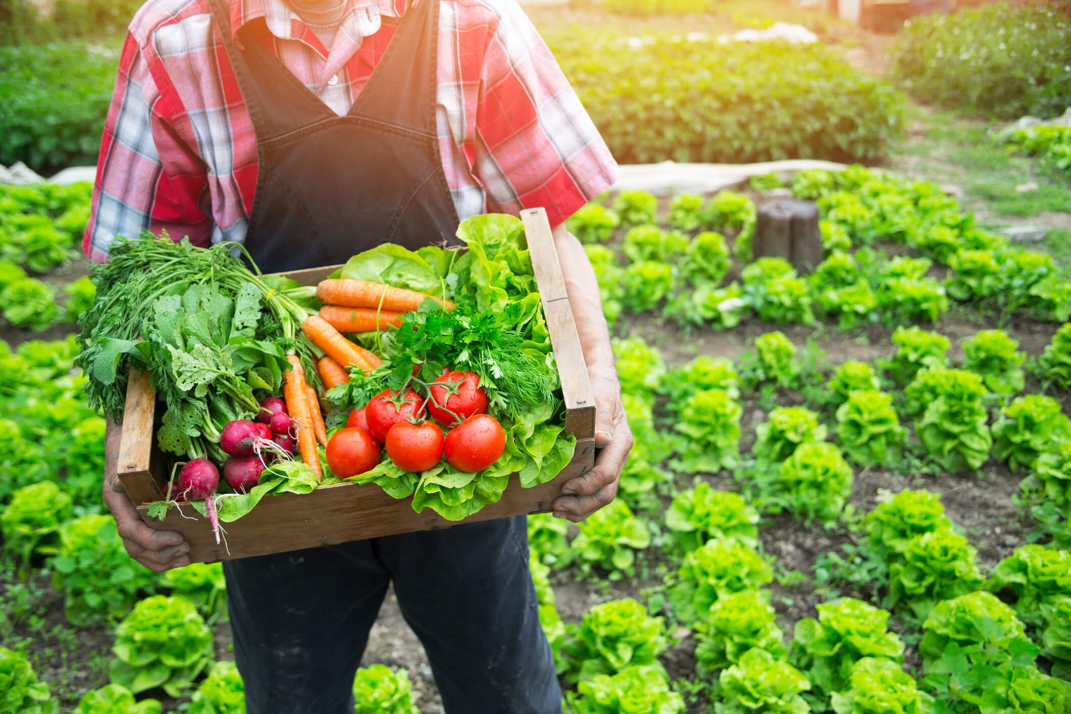 Some Practical Reasons For You To Switch To Natural Foods