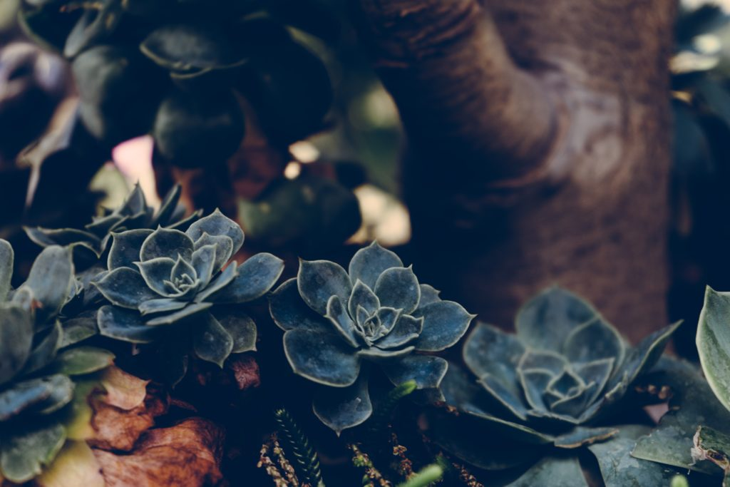 Organic beauty:Is fresh beauty all-natural?