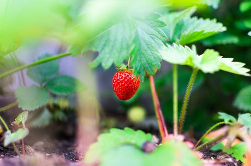Nature Facts About Eating Healthy To Stay Fit And Strong