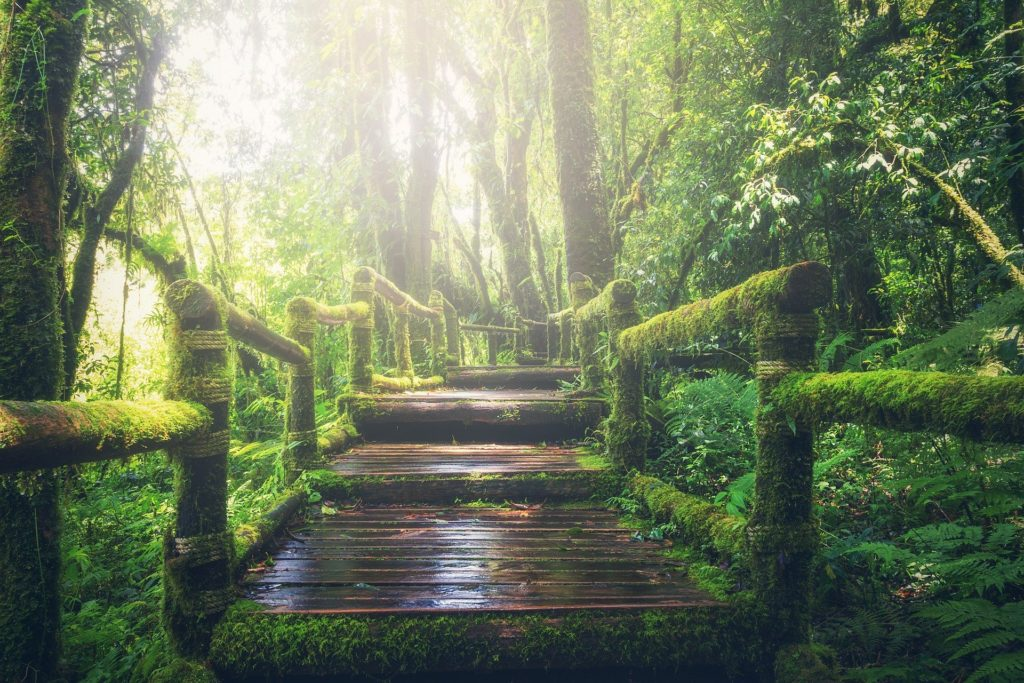 Nature Can Make You Happier, How To Be More Creative